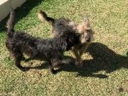 BLOG: Casal de cachorros procura adotante responsável