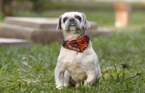 Divulgação - Cachorros e gatos estarão disponíveis para adoção neste domingo (25)