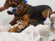Cães recebem atendimento veterinário, mas voltam pra rua