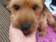 Protetora oferece R$ 1 mil de recompensa por cachorra sumida