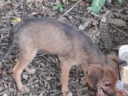 Resgatados cachorros que comiam folhas pra sobreviver