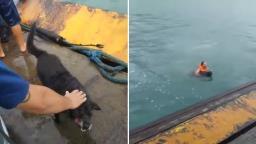 Herói: Funcionário de balsa pula no mar para resgatar cachorro