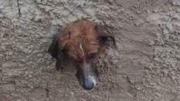 Cão é resgatado após prender cabeça em muro no Broa