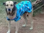 Campanha pet arrecada agasalho para animais carentes