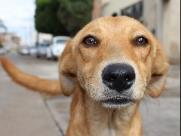 Câmara proíbe cachorros em clínicas de reabilitação