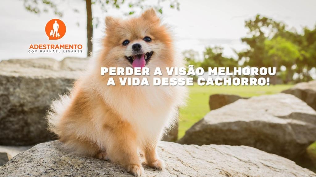 Cachorro cego - Foto: Mundos dos Bichos