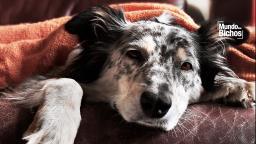 Tosse dos Canis: entenda o que é essa zoonose comum em dias frios