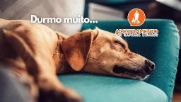 Cães que dormem muito, normal?
