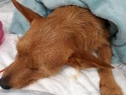Cão castrado sem anestesia tem alta e volta para casa