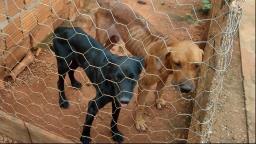 Homem é preso por maus-tratos a cães em cidade da região