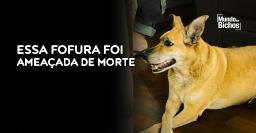 Cachorra é jurada de morte por carta anônima