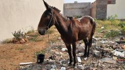 Animais abandonados e vítimas de maus-tratos são recolhidos em São Carlos