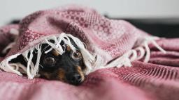 Veterinário dá dicas para cuidar do seu pet durante tempo frio e seco