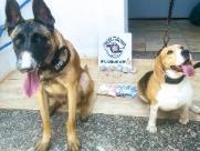 Cães da PM ajudam a prender jovem com drogas no Hortênsias