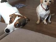 Cães são vítimas de maus tratos em condomínio de Araraquara