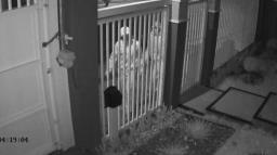 Polícia prende suspeito de roubar e matar idoso em casa