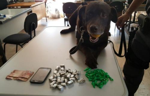 ACidade ON - Cão Billy farejou drogas escondidas em terreno (Divulgação)