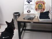 Cão ajuda a achar droga com passageiros em Viracopos