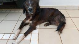 Mulher procura cachorro desaparecido na zona Leste de Ribeirão