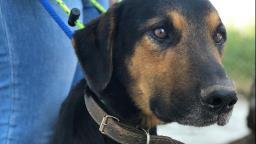 Homem é preso por manter cão sem água e comida