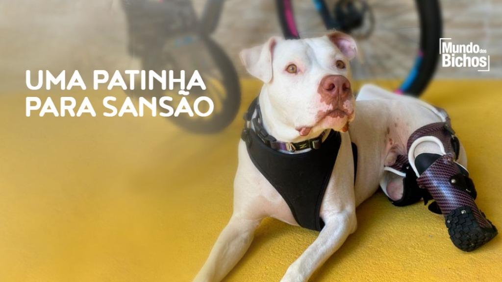Cão Sansão - Foto: Mundos dos Bichos