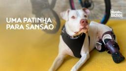 Cão Sansão volta a andar graças a doação de prótese