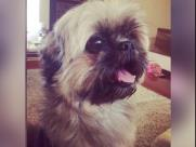 Família acha cãozinho furtado por ladrão na Vila João Jorge