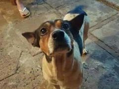 Cãozinho sumiu no último dia 16 na região do Jardim Martinez - Foto: ACidade ON - Araraquara