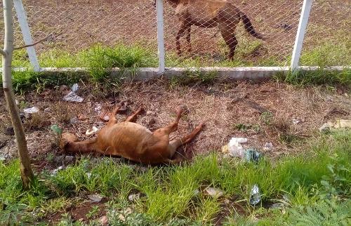 Cavalo morto incomoda os moradores (Foto: arquivo pessoal) - Foto: Outros