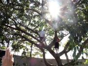 Campinas terá primeiro censo de árvores de sua história