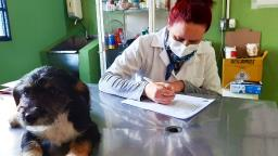 Ibaté continua realizando atendimentos e cirurgias durante a pandemia