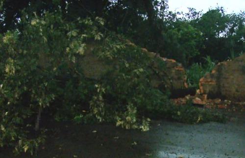 ACidade ON - São Carlos - Chuva causa queda de árvores, alagamentos e interdição de vias em São Carlos