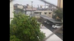 Chuva com vento de 76,6 km/h derruba árvores em carro e casa