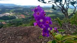 Leitores do ON flagram momentos incríveis pelo Brasil