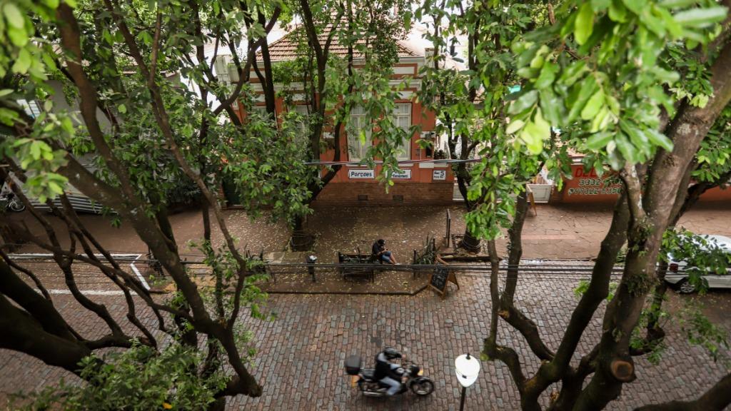 Clima tempo Rua dos Oitis rua 5 paisagem árvores primavera (Foto: Amanda Rocha) - Foto: Amanda Rocha