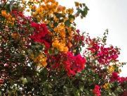 Primavera chega com possíveis mudanças climáticas em Ribeirão