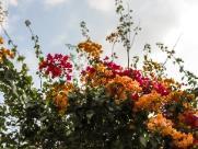Primavera chega com clima mais ameno e máxima de 29ºC