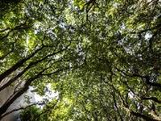 Diagnóstico avalia a situação das árvores de Araraquara