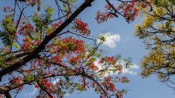 Temperatura em Araraquara deve chegar aos 31 graus