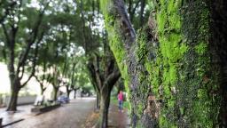 Araraquara terá tempo seco e temperatura baixa