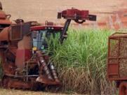 Colheita mecânica da cana-de-açúcar na região de Ribeirão Preto - Foto: Foto: F.L.Piton / A Cidade 06/julho/2016