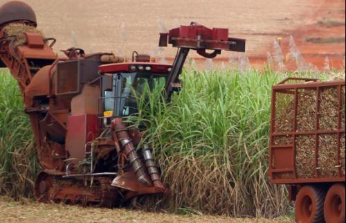 Foto: F.L.Piton / A Cidade 06/julho/2016 - Colheita mecânica da cana-de-açúcar na região de Ribeirão Preto