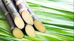 Região Sudeste registra maior queda no preço do etanol