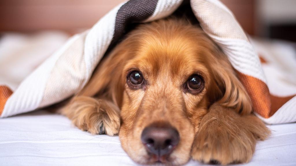 Confira dicas de como manter a saúde do seu animal de estimação em dias gelados (Foto: Pixabay) - Foto: (Foto: Pixabay)