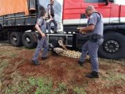 Motorista é detido suspeito de transportar 580 tabletes de drogas