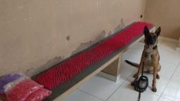 GM de Cosmópolis encontra 3,2 mil pinos de cocaína enterrados