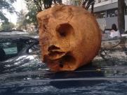Crânio aparece em veículo nas proximidades do cemitério São Bento