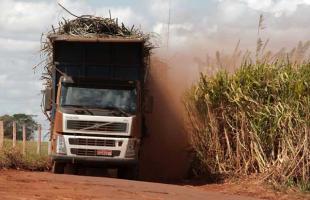 Safra de cana-de-açúcar - Foto: Weber Sian/A Cidade