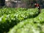 Projeto destina R$ 3 milhões para a agricultura da região