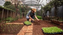 Hortas urbanas: o prazer de cultivar o próprio alimento